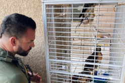 Red-Tailed Hawks Rescued Amongst Burglars' Haul of Ghost Guns and Stolen Vehicles