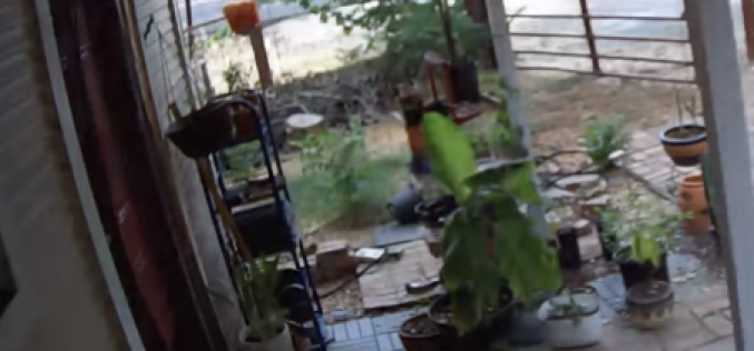 Thief caught on camera taking bike off of porch