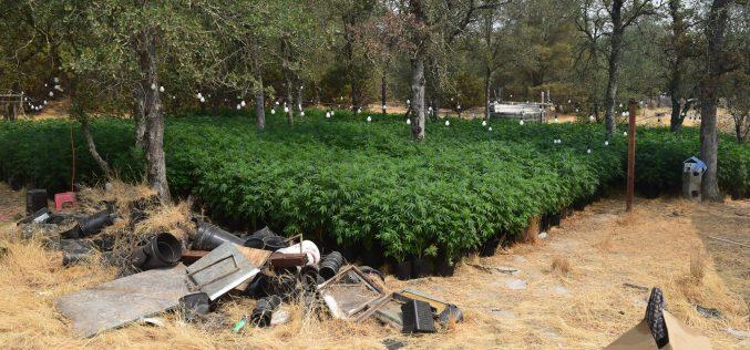 Calaveras County Sheriff's Office Marijuana Team Recap August 5th and 19th, 2021