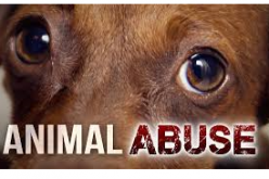 Man Kills Family Dog by Setting it Ablaze – Charges Filed