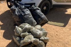 Several Suspects Arrested for Outdoor Marijuana Cultivations in Operation Hammer Strike's Second Week