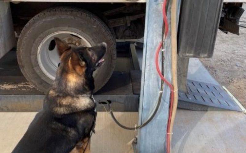 K-9 Thwarts Smuggling Attempt – Alerts to Liquid-Meth Drip Under Truck